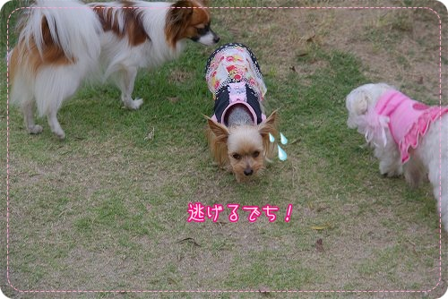 09520hiyokomama038.jpg