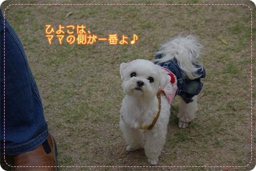 09520hiyokomama070.jpg