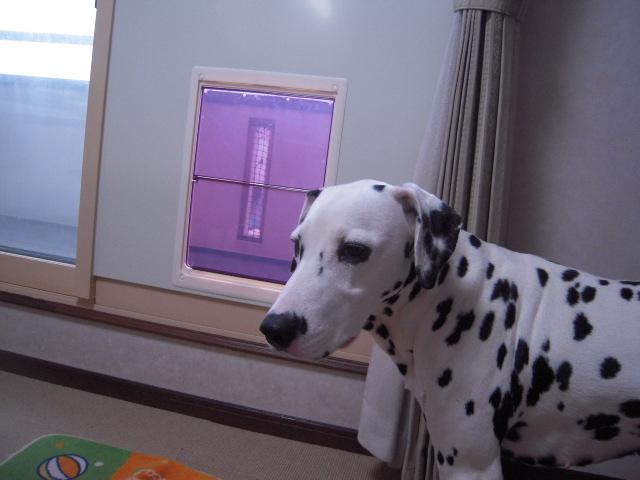犬用出入り口 005