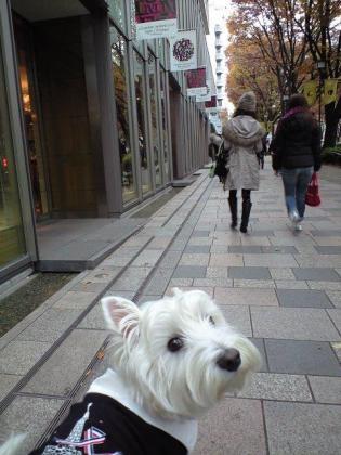 表参道お散歩.JPG
