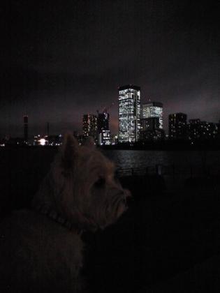 夜景③.JPG