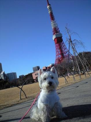 タワー②.JPG
