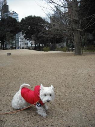 どんぐり公園①.JPG