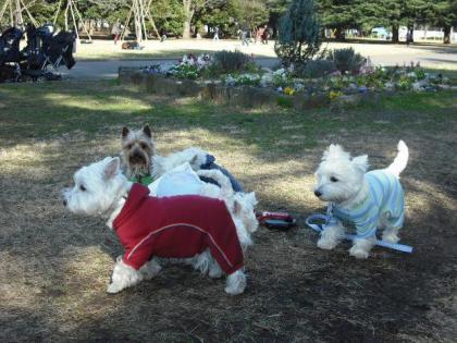 公園・集合②.JPG