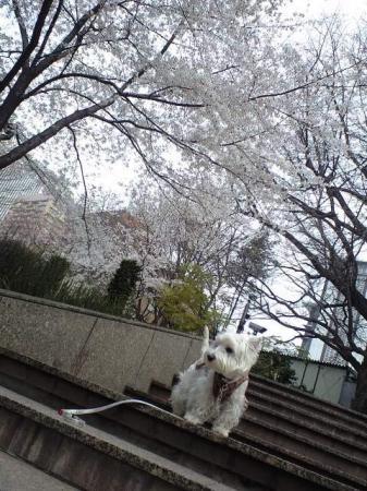いつもの散歩道①.JPG