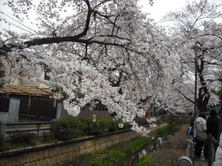 桜①.JPG