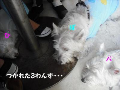疲れた3わん.JPG