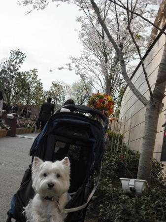 赤坂サカス④.JPG
