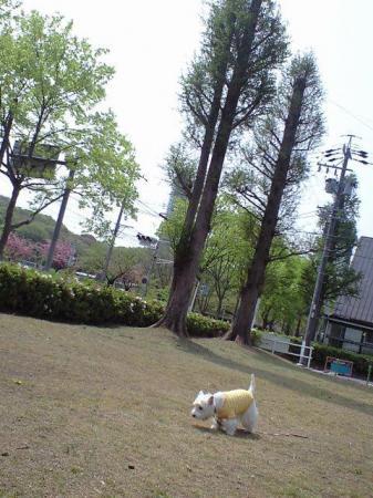 公園①.JPG