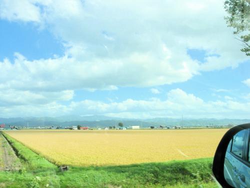 北海道の田んぼ
