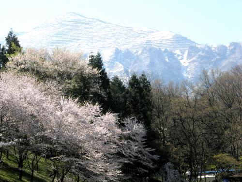 武尊山と桜