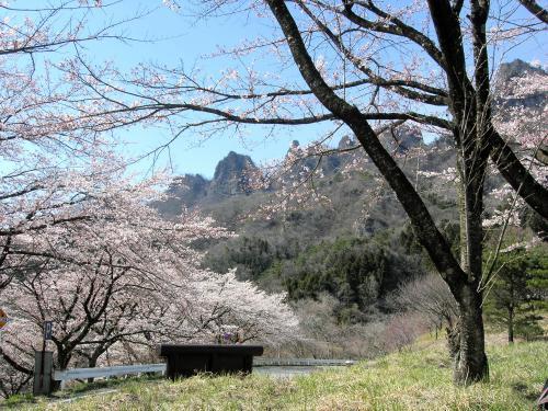 妙義山の桜2