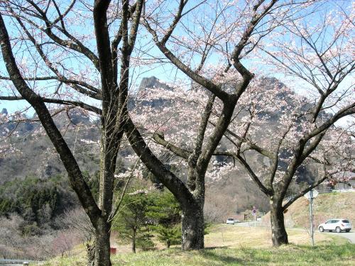 妙義山の桜