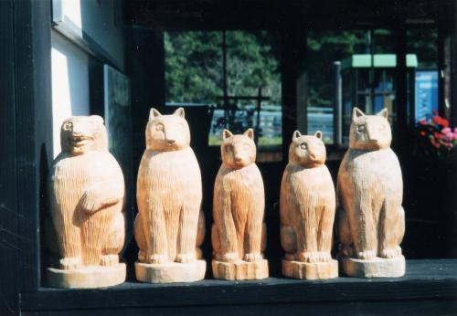 田野畑駅の猫