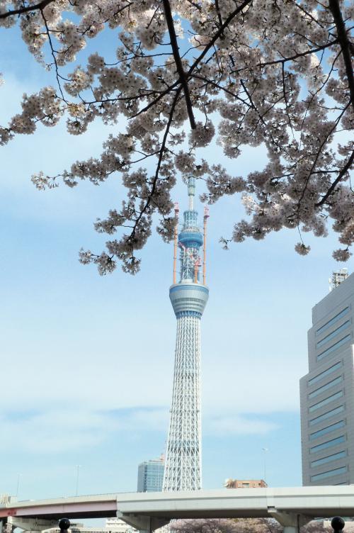 桜とスカイツリー・縦