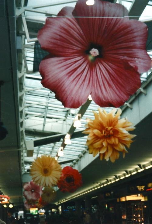 スキポール空港_convert_20110702230026