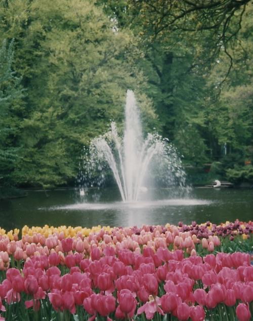 噴水とチューリップ_convert_20110708020337