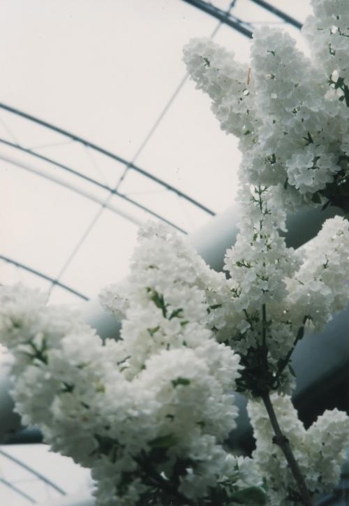 温室の花_convert_20110708191426