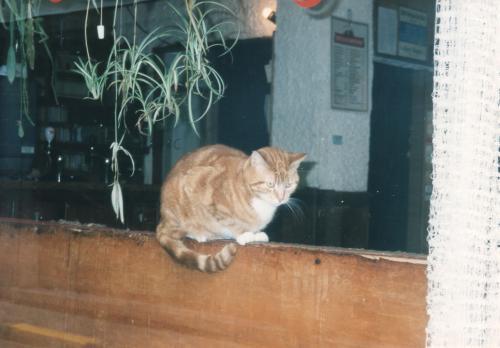 猫_convert_20110712084618