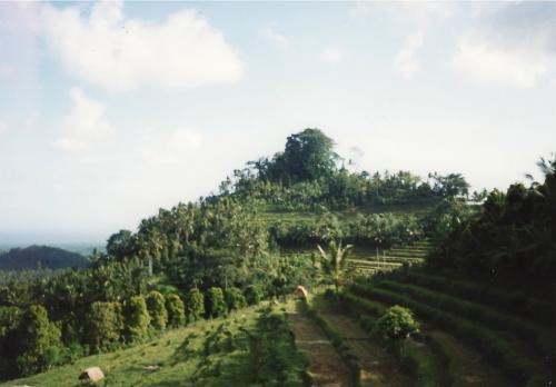 インドネシアのジャングル