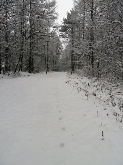 初雪から一夜がたって