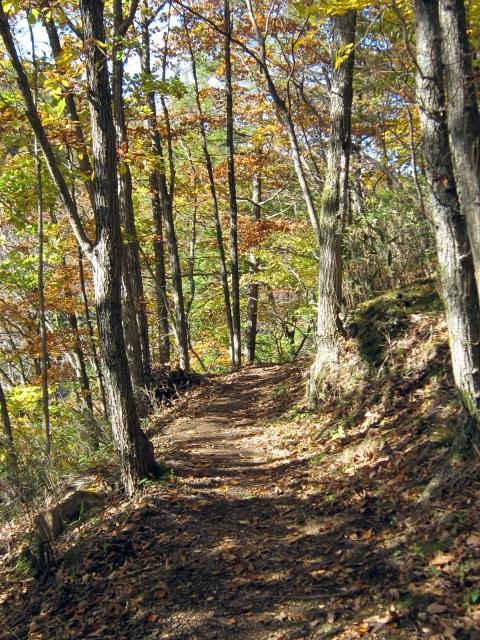 仏岩の山道