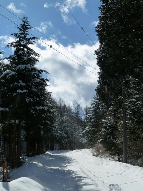 森の雪化粧