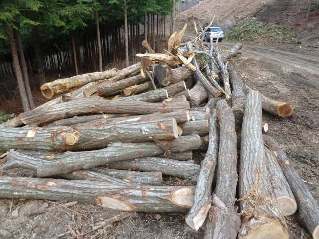 雑木の原木