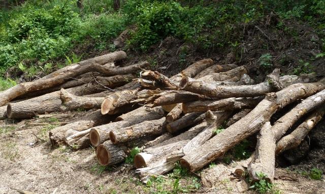 伐採地に残した原木