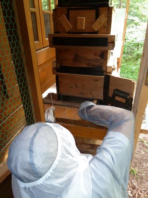 巣箱の掃除