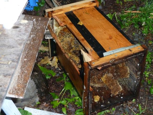 破壊された巣箱