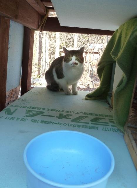 餌を待つネコ