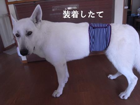 マナーベルター☆テーオ
