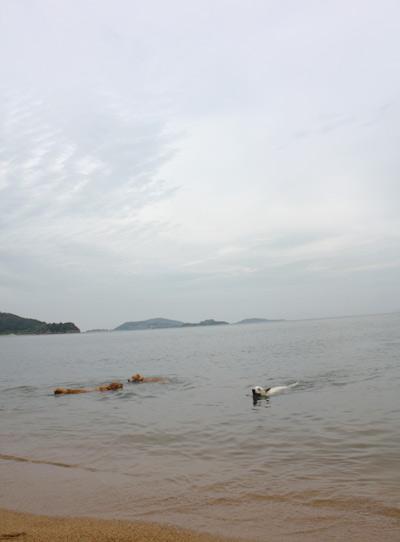 母なる海~