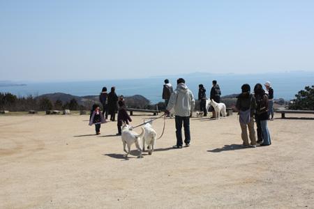 やっぱり美しい犬と海