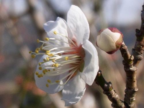 akiyosidai2011 151