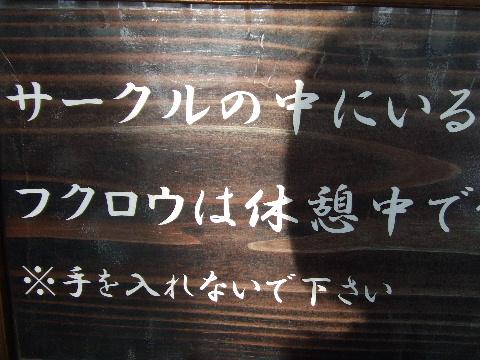 2009_03290077.jpg