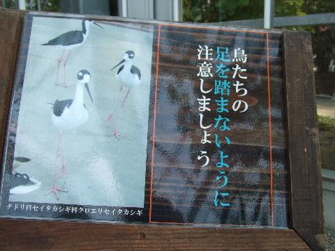 2009_03290135.jpg