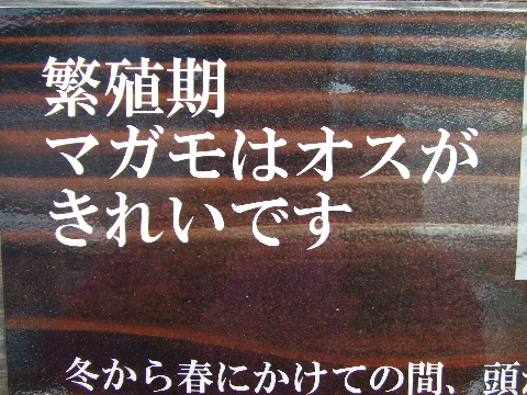 2009_03290155.jpg