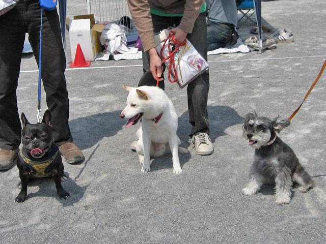 dog1 GP (11)