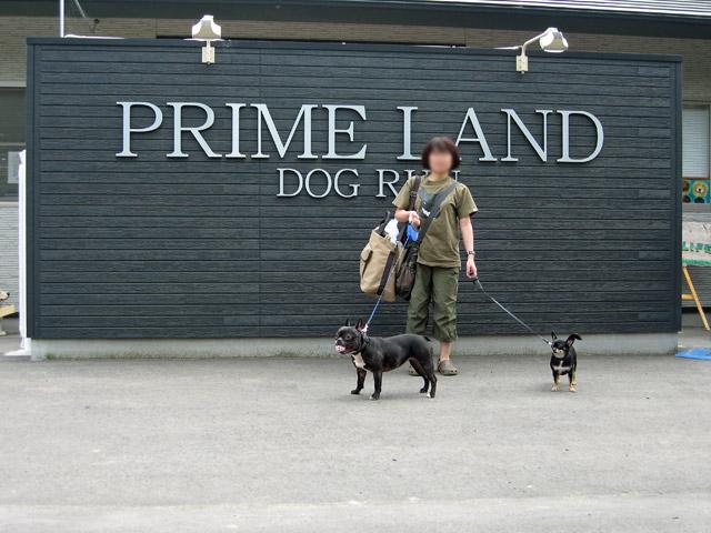 primeland  (3)