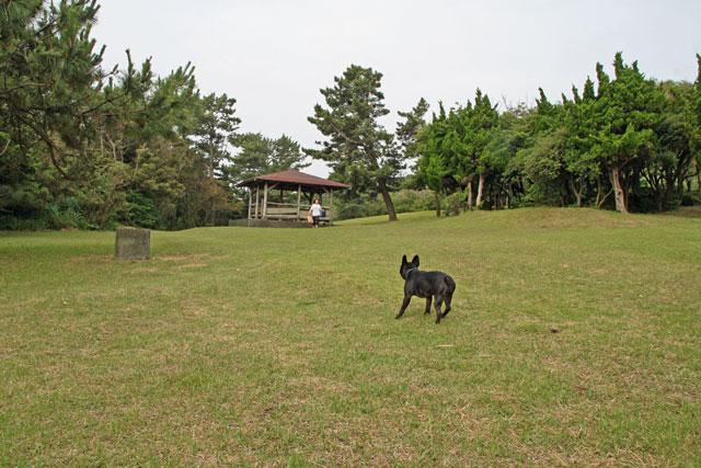 しっぽのおやど  (47)