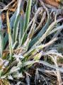 霜の花06