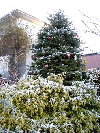 ホワイトツリー3