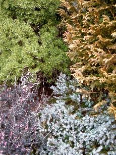 冬の4原色