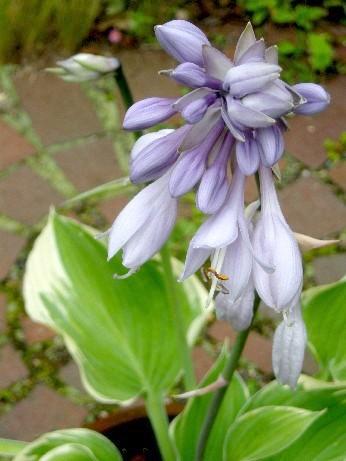 寒河江の花