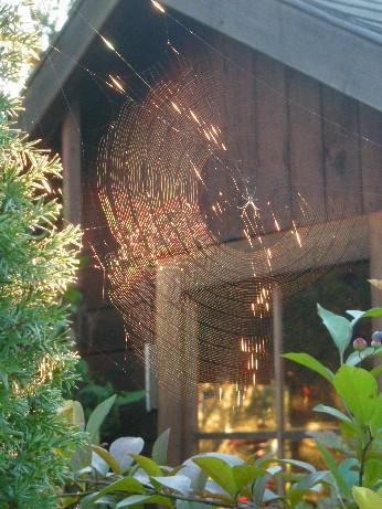 虹色に輝くクモの巣