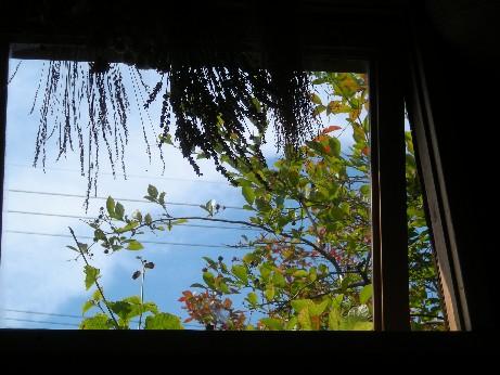 窓越しのブルーベリー