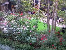 my-garden 8
