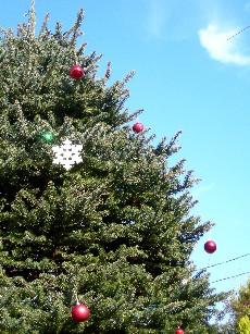 今年のツリー2